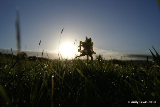 Sunrise and yellow rattle